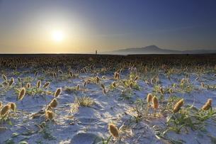 鳥取県の弓ヶ浜半島から伯耆大山の日の出 砂浜を歩く人の写真素材 [FYI04836799]
