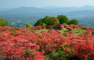 高柴山のヤマツツジの写真素材 [FYI04837140]