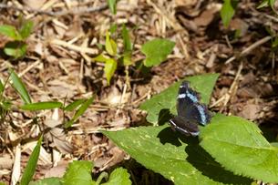 蝶の写真素材 [FYI04837172]