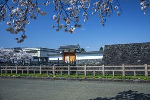桜の霞城公園の写真素材 [FYI04837284]