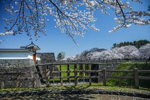 桜の霞城公園の写真素材 [FYI04837287]