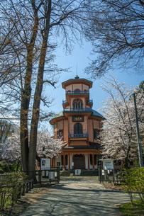 桜の霞城公園の写真素材 [FYI04837289]