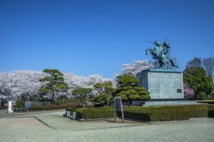桜の霞城公園の写真素材 [FYI04837291]