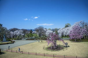 桜の霞城公園の写真素材 [FYI04837293]