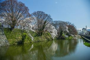桜の霞城公園の写真素材 [FYI04837294]