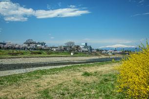 春の馬見ヶ崎川の写真素材 [FYI04837300]