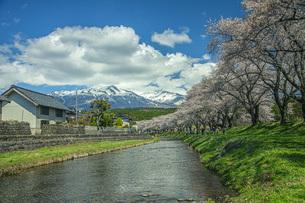 春の中山河川公園の写真素材 [FYI04837338]