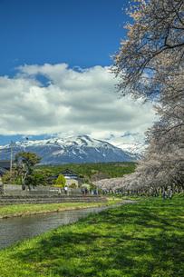 春の中山河川公園の写真素材 [FYI04837339]
