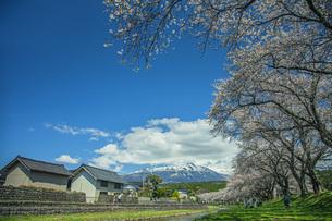 春の中山河川公園の写真素材 [FYI04837340]