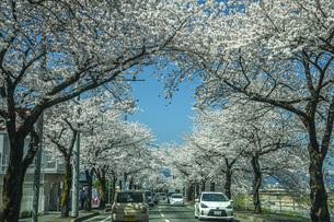 馬見ヶ崎桜ロードの写真素材 [FYI04837353]