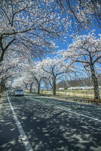 馬見ヶ崎桜ロードの写真素材 [FYI04837357]