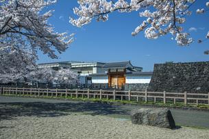 桜の霞城公園の写真素材 [FYI04837358]