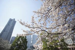 春の桜と高層ビルの写真素材 [FYI04837386]