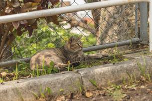 公園でくつろぐ猫の写真素材 [FYI04837611]