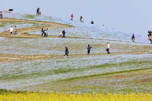 コロナ禍による臨時休園開始日前日の「みはらしの丘」の観光客の写真素材 [FYI04837639]