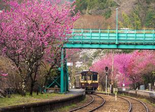 満開のハナモモやサクラ咲くわたらせ渓谷鉄道神戸駅と出発列車の写真素材 [FYI04837656]