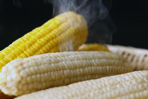 ピュアホワイトと黄色のトウモロコシの写真素材 [FYI04837741]