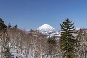 北海道 初春の羊蹄山の風景の写真素材 [FYI04837780]