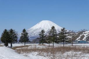 北海道 初春の羊蹄山の風景の写真素材 [FYI04837785]