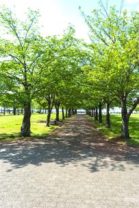 新緑の並木道の写真素材 [FYI04837858]