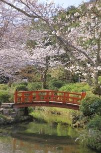桜咲く打吹公園の写真素材 [FYI04838117]