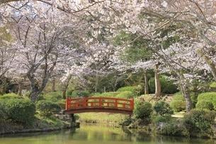 桜咲く打吹公園の写真素材 [FYI04838119]