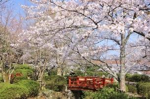 桜咲く打吹公園の写真素材 [FYI04838123]
