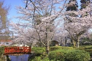 桜咲く打吹公園の写真素材 [FYI04838124]