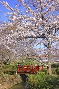 桜咲く打吹公園の写真素材 [FYI04838125]
