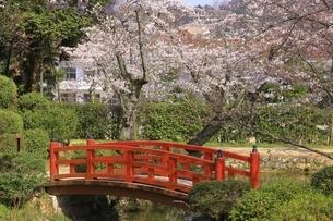 桜咲く打吹公園の写真素材 [FYI04838128]