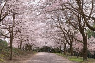 とっとり花回廊の写真素材 [FYI04838198]