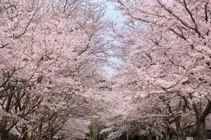 とっとり花回廊の写真素材 [FYI04838199]
