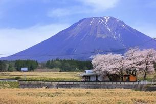 大山と桜の写真素材 [FYI04838204]