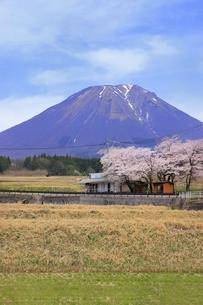 大山と桜の写真素材 [FYI04838205]