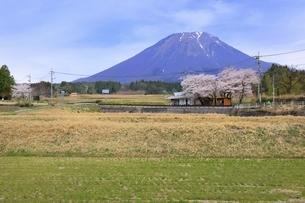 大山と桜の写真素材 [FYI04838206]