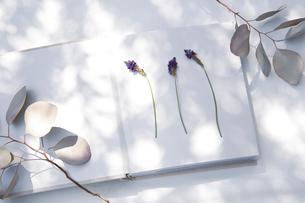 自然光と植物の影が差し込む、白のファブリックに置かれた本の写真素材 [FYI04838594]