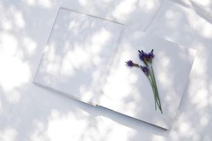 自然光と植物の影が差し込む、白のファブリックに置かれた本の写真素材 [FYI04838600]