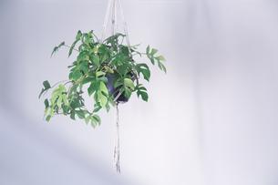 吊るし植物のハンギングプランターのグリーンがある室内の写真素材 [FYI04838614]
