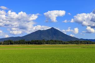 茨城県 水田と筑波山の写真素材 [FYI04838763]
