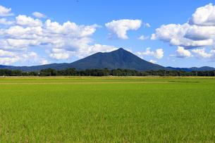茨城県 水田と筑波山の写真素材 [FYI04838764]
