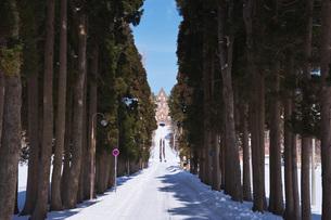 トラピスト修道院と杉並木と雪の道の写真素材 [FYI04838963]