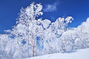 オロフレ峠付近の樹氷の写真素材 [FYI04838970]