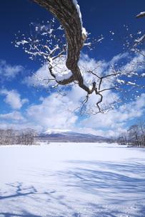 大沼と駒ケ岳の写真素材 [FYI04838977]
