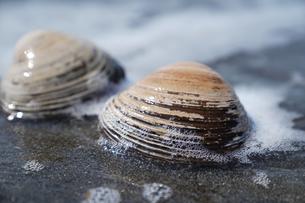 ホッキ貝の写真素材 [FYI04838992]