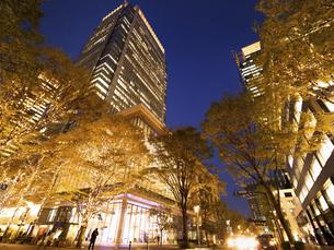 丸の内仲通りのイルミネーション 東京都の写真素材 [FYI04838996]