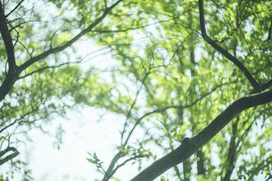寒さやわらいだ小春日和の美しい新緑の木漏れ日の写真素材 [FYI04839063]
