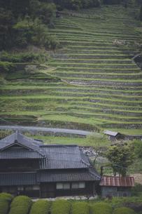 福岡県うきはの美しいつづら棚田の風景の写真素材 [FYI04839087]