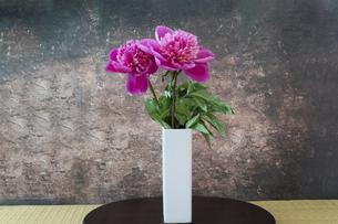 白い花瓶とシャクヤクの写真素材 [FYI04839242]