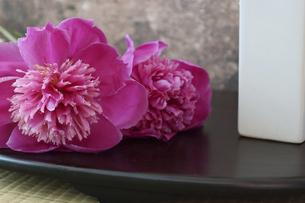 白い花瓶とシャクヤクの写真素材 [FYI04839243]