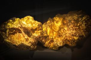大きな金槐のクローズアップの写真素材 [FYI04839273]